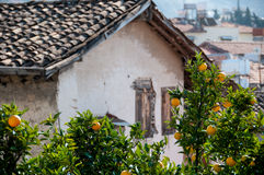 Old house and orange trees with fruits Royalty Free Stock Image