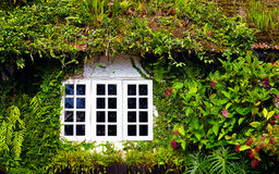 Old house overgrown with beautiful plants and flowers. Cameron Highlands, Malaysia Stock Photography