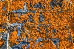 Old house overgrown orange lichen, Sao Miguel Island, Azores. Archipelago, Portugal stock photo