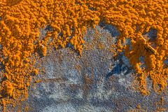 Old house overgrown orange lichen, Sao Miguel Island, Azores. Archipelago, Portugal royalty free stock images