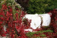 Old House Property Gate with Overgrown Vegetation  Stock Photos