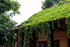 Old House roof covered with vines and trees. Royalty Free Stock Photos