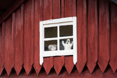 Old house in a small city in Sweden. Old house in a small city in southern Sweden Royalty Free Stock Image