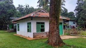 Old house and tree. Classic old house at Indonesia royalty free stock images