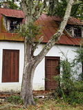 Old house and tree vertical. Old house with red metal roof and tree in front yard stock photo