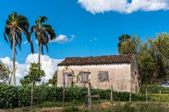 The abandoned house and the Palms. An old house and two palm trees. History and the future. The agriculture that advances. Crops royalty free stock images