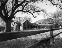 Old House Under Oak Tree Stock Image
