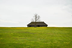 An old house. A very old house with a sole tree in the middle of meadow full with dandelions Royalty Free Stock Photography