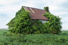 Old House With Vines Royalty Free Stock Photos