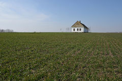 Old house in wheat field Royalty Free Stock Photo
