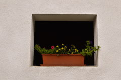 Hold house tiny window. Window of old house beautified with flowers royalty free stock photo