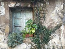 Old house. An old window in an old house covered with live plants Royalty Free Stock Photography