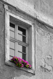 Old house window with flowers. Close-up of a decrepit house window behind which are the flowers Royalty Free Stock Images