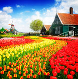 Old  houses of Zaanse Schans, Netherlands. Rural dutch scenery of small old houses and canal with windmill and tulips rows, Netherlands, retro toned Royalty Free Stock Image