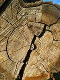 Huge split log texture royalty free stock photos