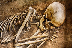 old human bones Royalty Free Stock Photos