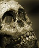Old human skull Stock Photos