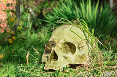 Old human skull in the garden Stock Images