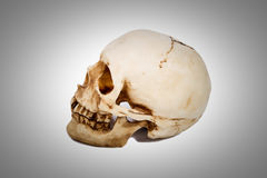 Old human skull isolated on background. Old human skull with teeth isolated on background royalty free stock image