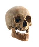 Old human skull. Royalty Free Stock Photo