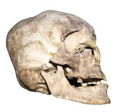 Old human skull Royalty Free Stock Photo