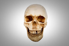 Old human skull isolated on white background. Old human skull with teeth isolated on white background royalty free stock photos