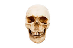 Old human skull isolated on white background. Old human skull with teeth isolated on white background stock photo
