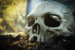 Old Human skull Royalty Free Stock Image