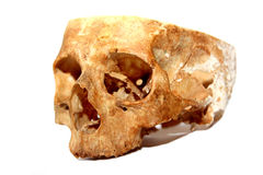 Old human skull Royalty Free Stock Photography
