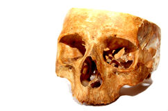 Old human skull Stock Photography
