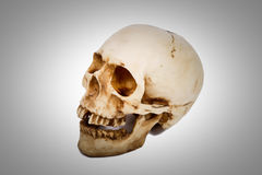 Old human skull   on white background. Stock Images