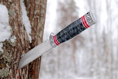Old hunting knife stuck into a pine tree Royalty Free Stock Image