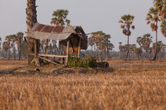 Old hut in a field. Stock Photography