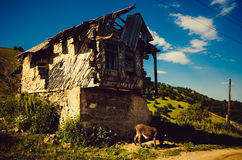 Old hut. On a hillock with a donkey Royalty Free Stock Images