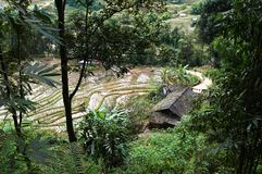 Old hut near flooded rice fields. Traditional Vietnamese rural landscape with rice terraces in the mountains near Sa Pa, Vietnam royalty free stock photo