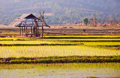 The old hut in a rice farm. The old hut in a rice farm ,north of Thailand Royalty Free Stock Images