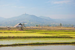 Old hut in a rice farm. With mountain background ,north of Thailand Royalty Free Stock Photos