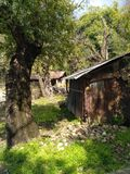 An old hut under a tree royalty free stock images