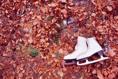 Old ice skates in autumn Stock Photos