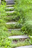 Old steps at a forest. Old improvised steps on a hill in the forest. photo close-up, side view Stock Image