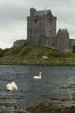 Old Irish Dunguaire castle with swans Royalty Free Stock Photos