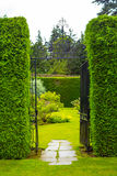 Old iron garden gate with high  hedges Stock Photos
