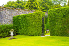 Old iron garden gate with high hedges Royalty Free Stock Images