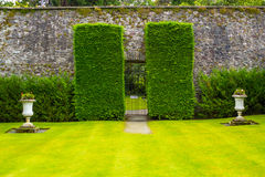 Old iron garden gate with high hedges Stock Images
