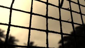 Old iron mesh with cobwebs Royalty Free Stock Images