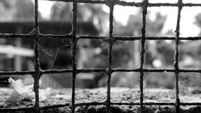 Old iron mesh with cobwebs Royalty Free Stock Photos