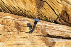 Old iron nail Round timber Stock Images