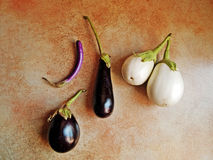 Old italian heritage varieties of eggplant. Royalty Free Stock Images