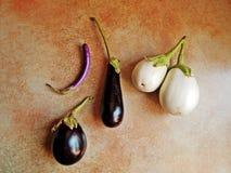 Old italian heritage varieties of eggplant. Royalty Free Stock Images