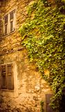 Old Italian house with walls covered with plants. royalty free stock photography